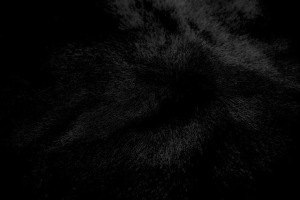 8 black-pony