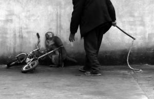 Foto: Yongzhı Chu